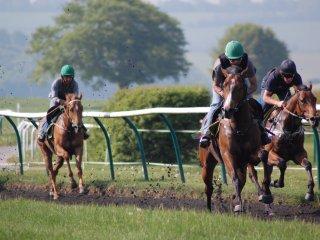 Stan Moore Racing J S Moore racehorse trainer England